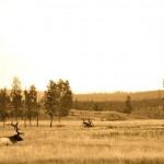 Yellowstone WY, Idaho and everywhere between