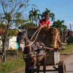cuba Horse